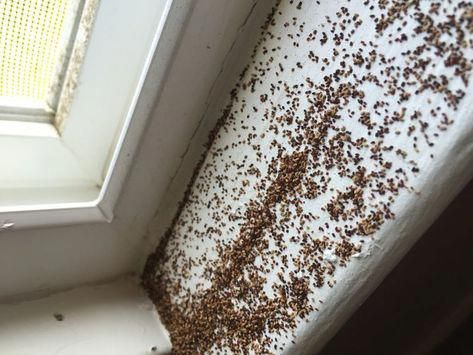 How To Get Rid Of Termites Alkanz Alzahabi Has Been Providing Commercial Pest Control Services In Dubai And Sharjah For Wood Termites Termite Control Termites