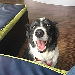 Pin By Cynthia On Animal Rescue Site Border Collie Animal