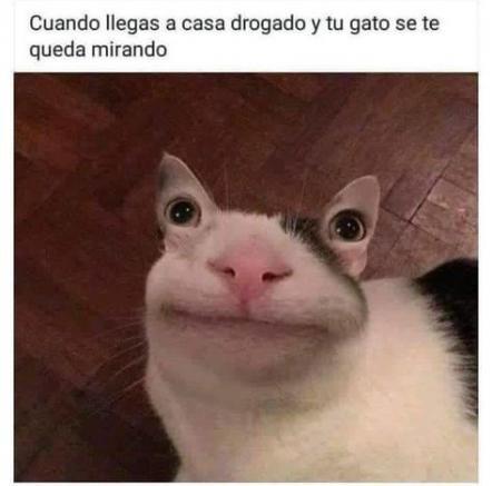 Memes Humor Dank 33 Ideas In 2020 Funny Animal Memes Funny Spanish Memes Funny Cat Memes