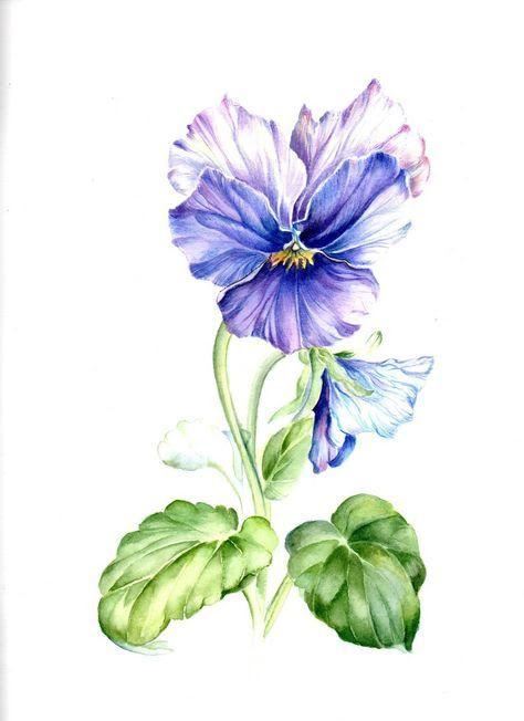 Pin Ot Polzovatelya Kusova Na Doske Watercolor Flowers Cvetochnoe Iskusstvo Akvarelnaya Zhivopis Narisovat Cvety