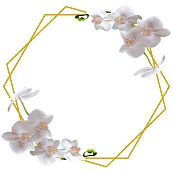 مواليد Flower Background Wallpaper Flower Frame Flowery Wallpaper