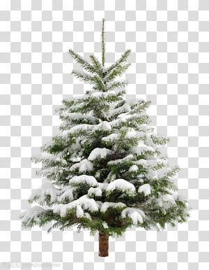 Green Christmas Tree Christmas Tree Snow Fir Pine Pine Trees Transparent Background Png Clipart Christmas Tree Clipart Pine Tree Painting Tree Clipart