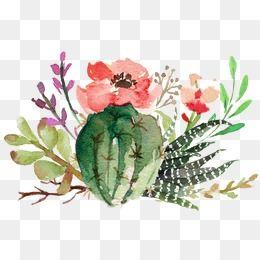 Cactus Png Imagenes Transparentes Vectores Y Archivos Psd Descarga Gratuita En Pngtree Free Watercolor Flowers Flower Png Images Cactus Clipart