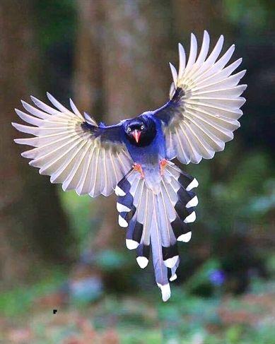 Finches For Sale Craigslist : finches, craigslist, Birds, Petfinder