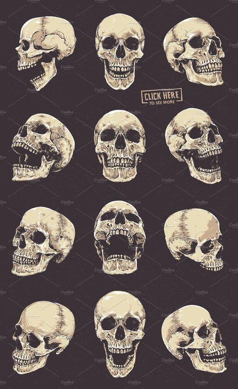 Anatomic Skulls Vector Pack #brushes#Illustrator#angles#drawn
