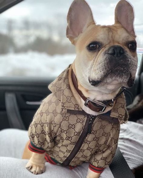 Gucci Classic Dog Hoodie Clothes For Sale In Los Angeles Ca Offerup Dog Clothes Patterns Dog Hoodie Luxury Dog