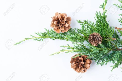 Christmas greenery with pine cones