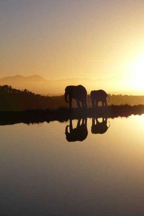 Accommodation in the Eastern Cape Addo Elephant Park Port Elizabeth South Africa What A Wonderful World, Beautiful World, Beautiful Places, Places To Travel, Places To Go, Travel Destinations, Visit South Africa, South Africa Safari, Viajes