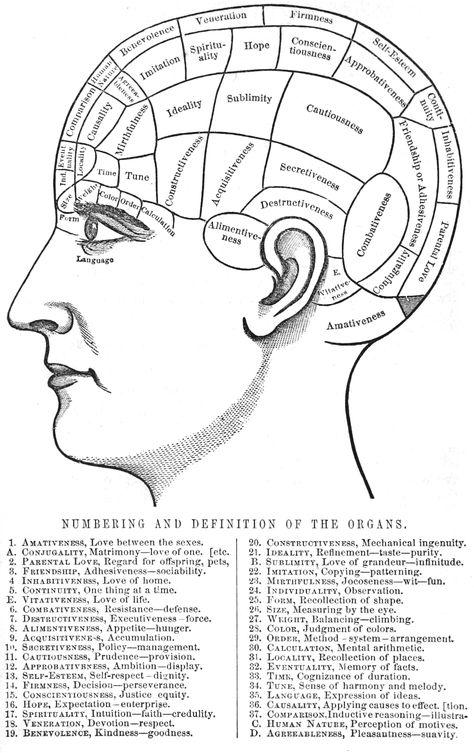 Phrenology Chart Poster