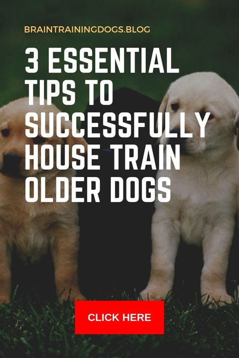 3 Essential Tips To Successfully House Train Older Dogs