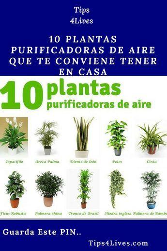 10 Plantas Purificadoras De Aire