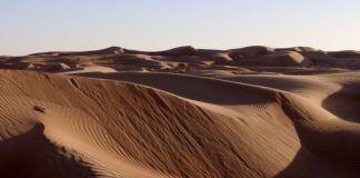 Desierto Clima Flora Fauna Y Caracteristicas Tipos De Bosques