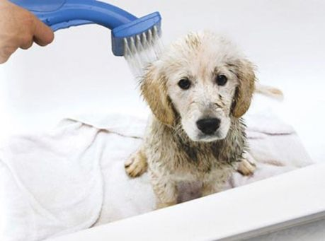 Petzoom Bath N Groom Cleaning System For Pets On Sale W Free