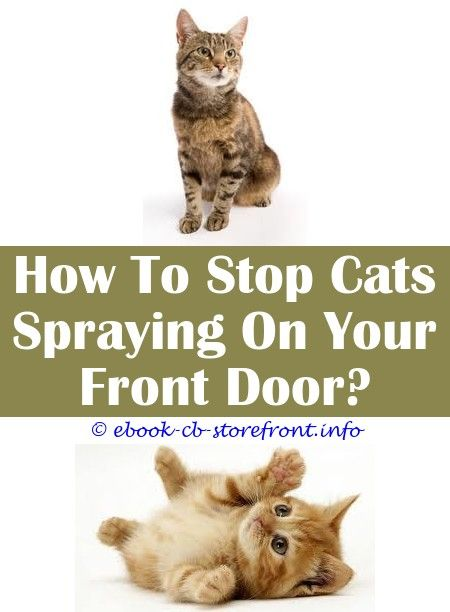 10 Stunning Cool Ideas Cat Still Spraying After Being Neutered
