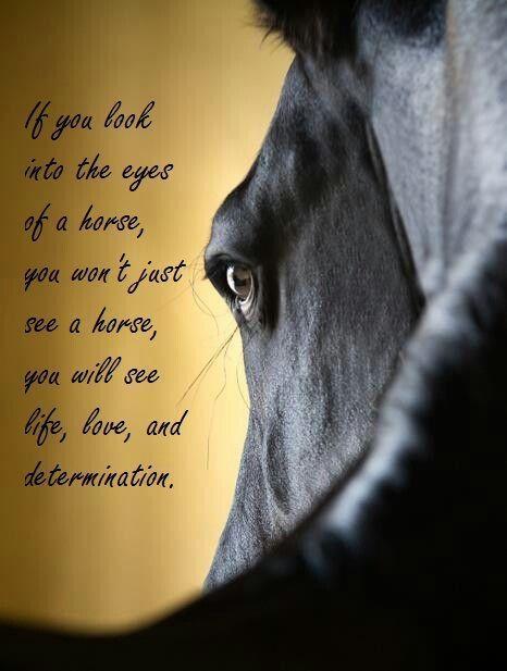 Horse Lovers Know What That Means A True Bond Pferde Zitate Pferdegedichte Pferde Spruche Englisch