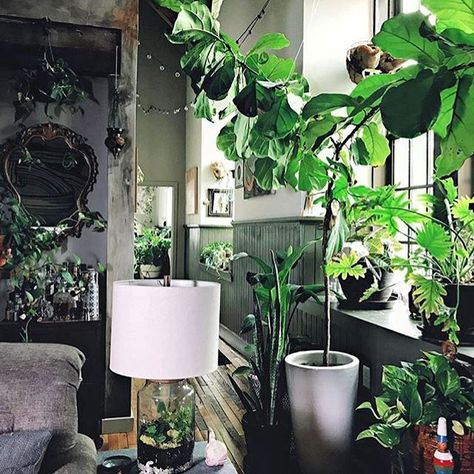 Indoor Plant Design Delivery And