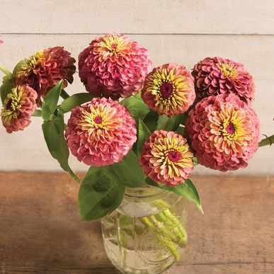 Queen Red Lime Zinnia Seed Johnny S Selected Seeds Flower Seeds Flower Farm Flower Farmer