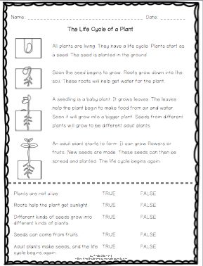 FREE Life Cycle of a Plant Reading Passage with Comprehension Questions for K-2