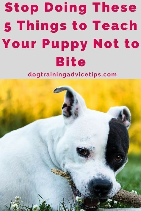 Stop Doing These 5 Things To Teach Your Puppy Not To Bite
