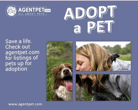 Adopt A Pet Visit Agentpet Com Adoption Adopt Diverse Shop Agentpet Buyandsell Petaccessories Petfood Petrelocation Petadopti Pets Online