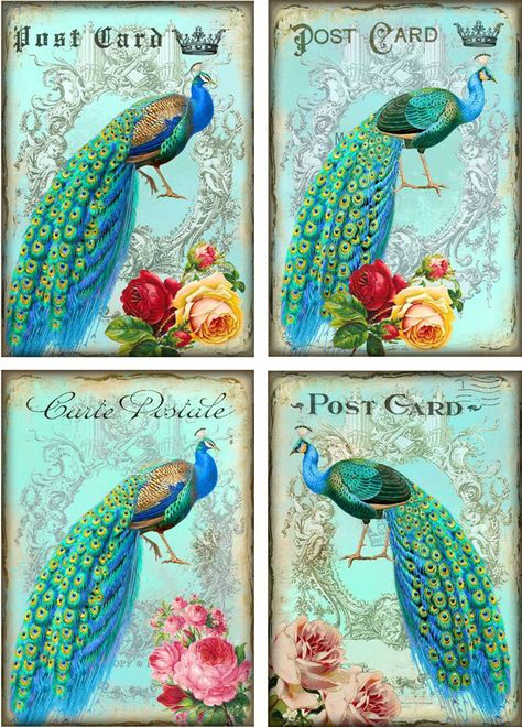 Vintage inspired peacock roses cards tags set of 8 with envelopes
