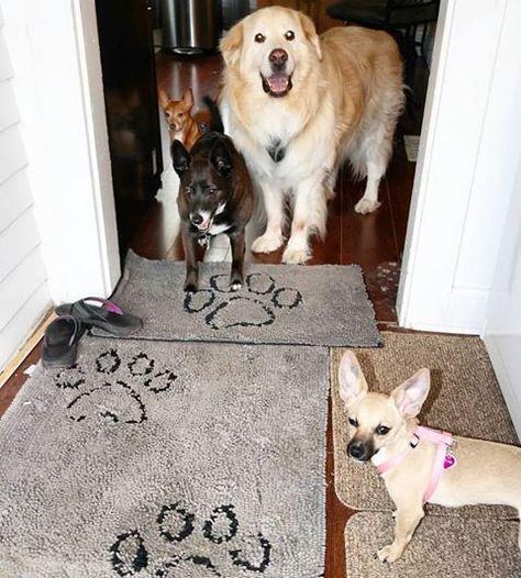 Pin On Dog Decor