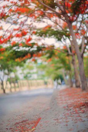 Blur Picsart Editing Photos Background