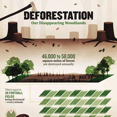 The Negative Impacts Of Deforestation Infographic For Full View