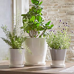 Wall Planter Hook Reviews Crate And Barrel Planters