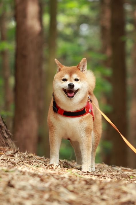 CANON(キヤノン)のカメラ Canon EOS 7Dで撮影した動物(リーダー in the forest)の写真(画像)