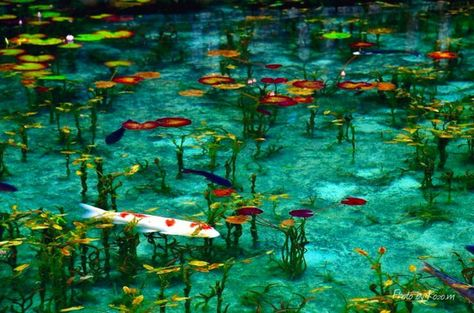 """死ぬまでに見てみたい!現実世界とは思えない絵画のような""""モネの池""""が美しすぎる   RETRIP[リトリップ]"""