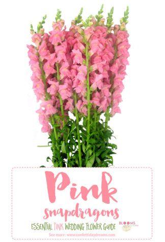 Pink flower name choice image flower decoration ideas pink flower name gallery flower decoration ideas pink flower name images flower decoration ideas pink flowers mightylinksfo