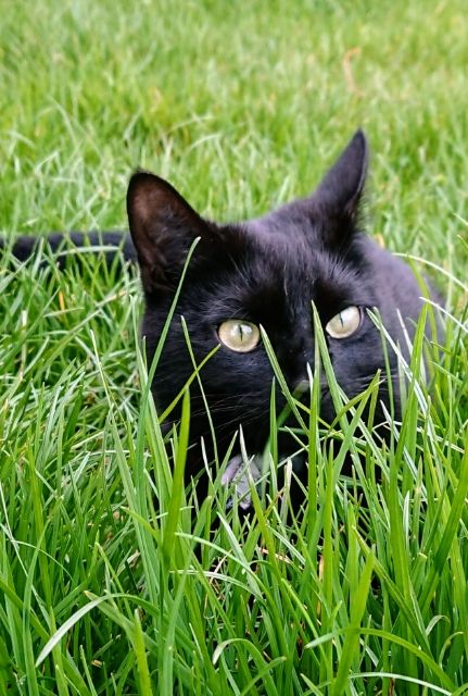 National Black Cat Day Black Cat Day National Black Cat Day Cats