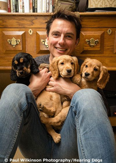 Hearing Dogs for the Deaf Awards - Gallery - John Barrowman The ... |  Hearing Dogs | What Is ... | Dogs, Dog help, Assistance dog