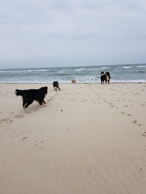 Strand Burgh Haamstede Strand Westenschouven Holland Danke An Claudia Fur Das Bild Hundestrand Holland Z Ferienhaus In Holland Holland Urlaub Mit Hund