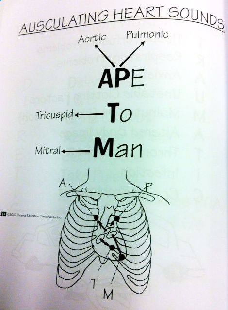 "rightatrium: """" Here is an oldie but a goodie - APE TO MAN, for auscultating heart sounds. Nursing Assessment, Cardiac Nursing, Nursing Mnemonics, Nursing School Notes, Nursing Schools, Medical School, Nursing Study Tips, Heart Sounds, Nurse Life"