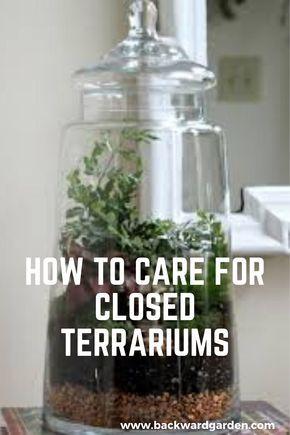 Closed Terrarium Plants, Large Glass Terrarium, Build A Terrarium, Water Terrarium, Terrarium Containers, How To Make Terrariums, Succulent Terrarium, Making A Terrarium, Indoor Water Garden