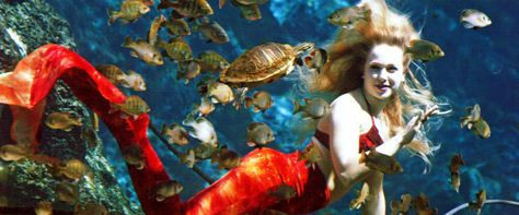 """Florida may be the only place in the world where mermaids are among the state employees. Weeki Wachee Springs, about an hour from Tampa, bills itself as """" The Only City Of Live Mermaids!"""""""