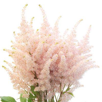 Astilbe Heirloom Essence Sun Valley In 2020 Wholesale Flowers Diy Wedding Flowers Online Wedding Flowers