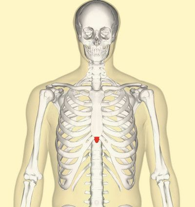 best 20+ xiphoid process ideas on pinterest—no signup required, Skeleton