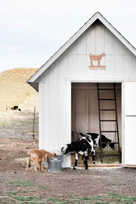 One of the many questions I receive about raising goats and keeping goats as pets is: How do you keep the goat barn clean? Today I am going to share how I keep our goat barn clean and how we keep our pet goats healthy! Keeping Goats, Raising Goats, Small Goat, Small Farm, Goat Shed, Goat Shelter, Goat House, Farm House, Goat Barn