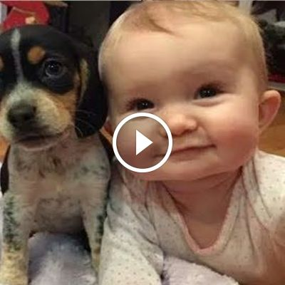 Dogs And Cats Cutest
