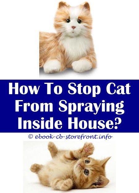 10 Bewitching Cat Spray Remover Baking Soda