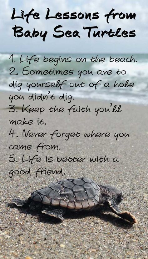 Life lessons from Baby Sea Turtles. 1. Life begins on the beach2. Sometimes you ave to dig yourself out of a hole you didn't dig.