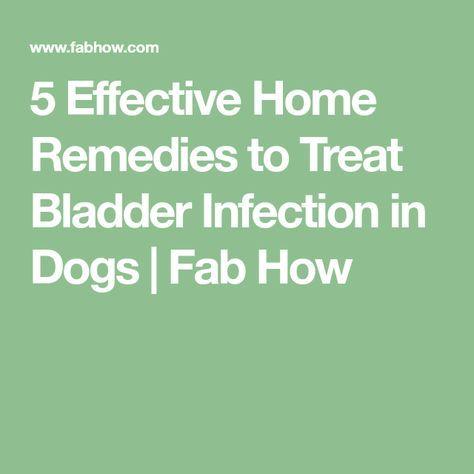 5 Effective Home Remedies To Treat Bladder Infection In Dogs Fab How Bladder Infection In Dogs Cure Bladder Infection Bladder Infection Remedies
