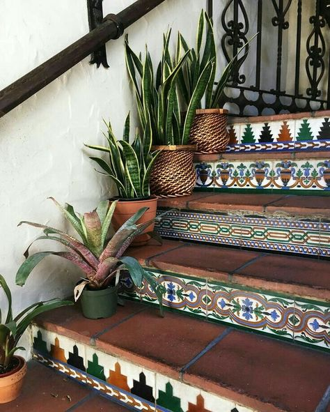 Plants along stairs