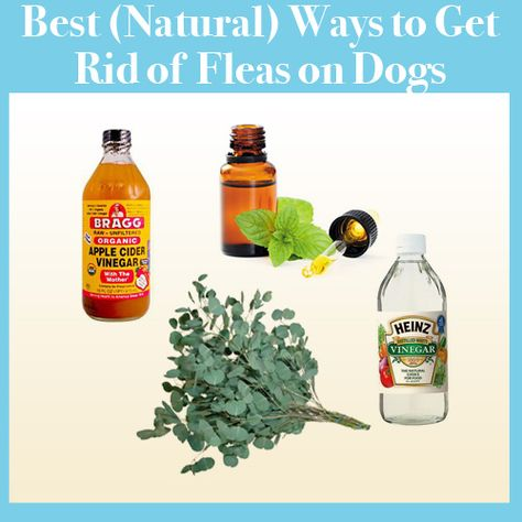 The Best Natural Ways To Get Rid Of Fleas Fleas Health Dogs