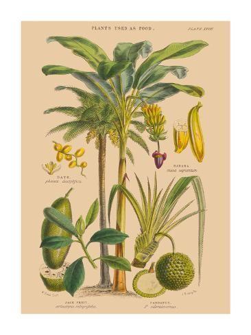 Bd 3 Plates 1782 Gemeinnuzzige Naturgeschichte Des Thierreichs Biodiversity Heritage Library Fauna Illustration Bird Prints Scientific Illustration