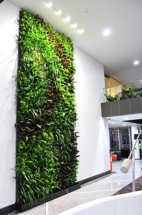 Green Wall Interior Livingwallsystems Vertical Garden Diy
