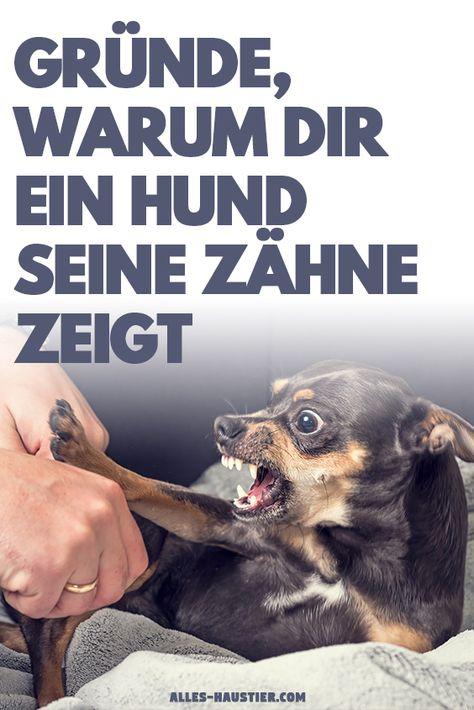 Pin Auf Hunde Blogs Auf Deutsch Diy Fotografie Basteln Wandern Pflege Tipps Rassen Rezepte Tricks Reisen Spiele Erziehung Welpen Bilder Kleidung Gruppenboard